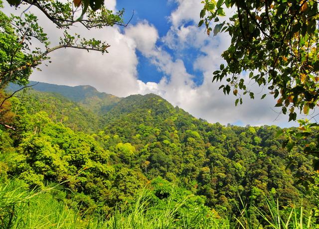 Lebatnya kanopi hutan acapkali membuat sinyal GPS tak bisa menembus (dok.pri).