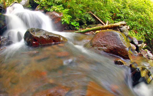 Hutan primer yang masih terjaga kealamiannya. Hutan ini terdapat sungai yang jernih dan 2 buah air terjun yang indah, curug Lawe dan Benowo (dok.pri)