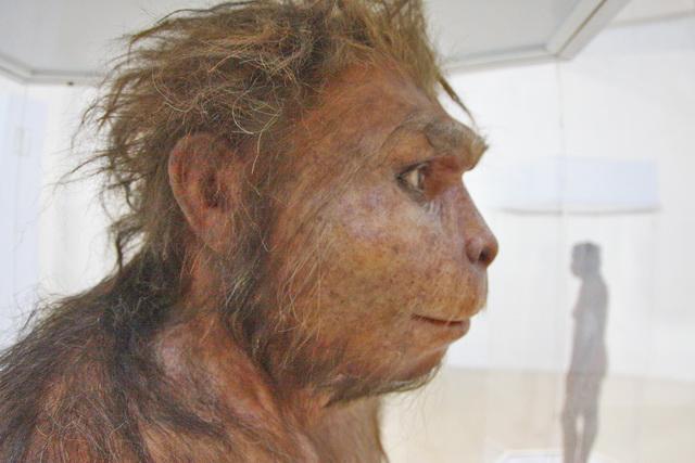 Siapa nenek moyang kita, yang pasti bukan yang di atas ini karena mereka sudah punah. Jawabannya ada di museum (dok.pri).