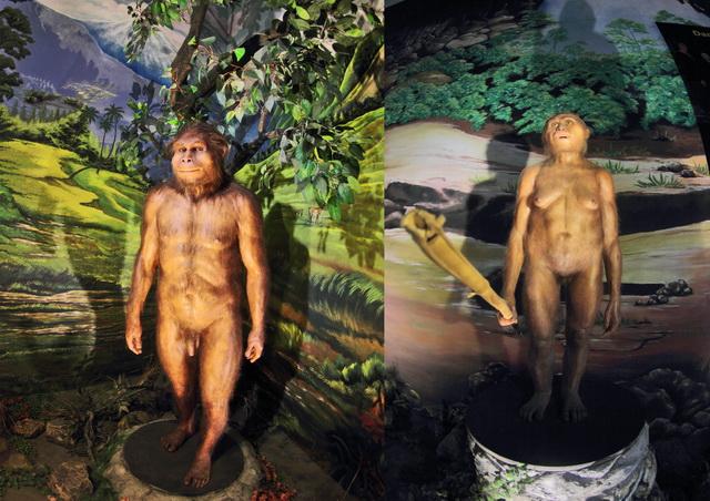 sangiran17 (kiri) dan Homo floresiensis (kanan) hasil rekonstruksi dan bisa menjadi gambaran utuh individu (dok.pri).